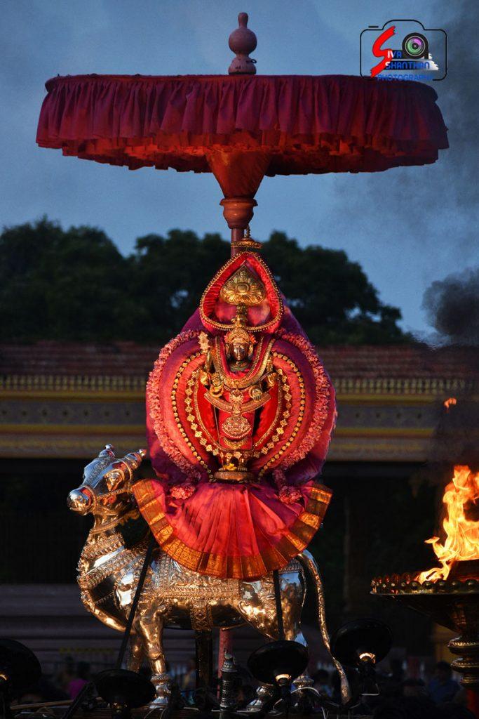 நல்லூர் கந்தசுவாமி கோவில் கந்தசஷ்டி உற்சவம் – 2ம் நாள் 7